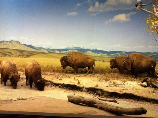 Why, hello North American Bison!